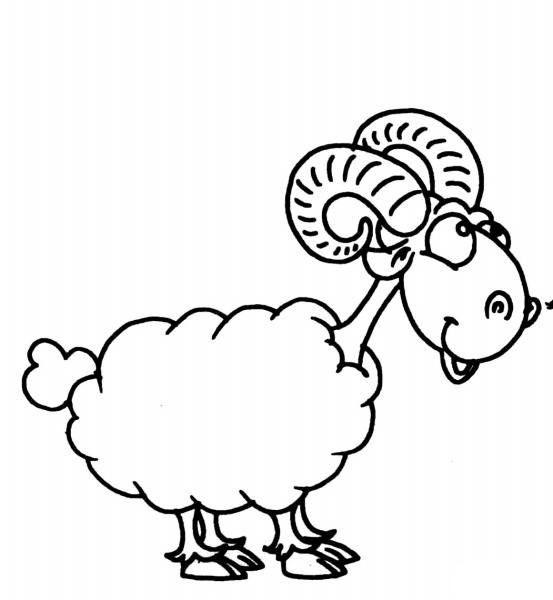 澳洲羊多,羊毛就好,凭啥 澳洲羊毛和中国羊毛有啥区别 海淘网